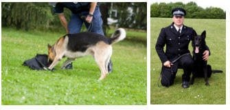 Become A Police Dog handler.