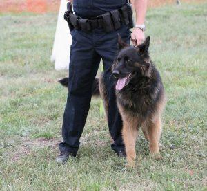 Become a Police Dog Handler