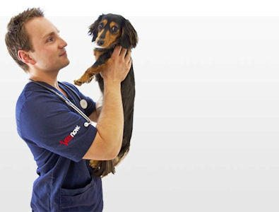 Want to become a veterinary surgeon? Check out our advice!