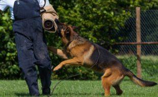 dog-image-5