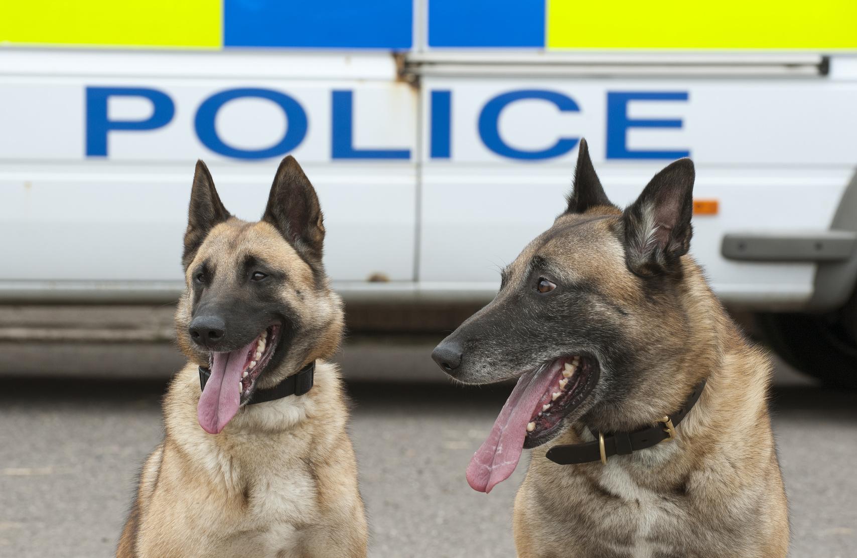police dogs in front of van