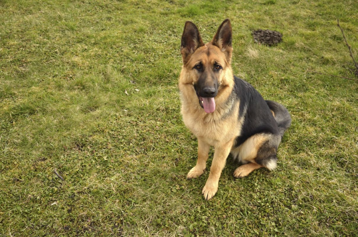 careers-become-a-police-dog-handler