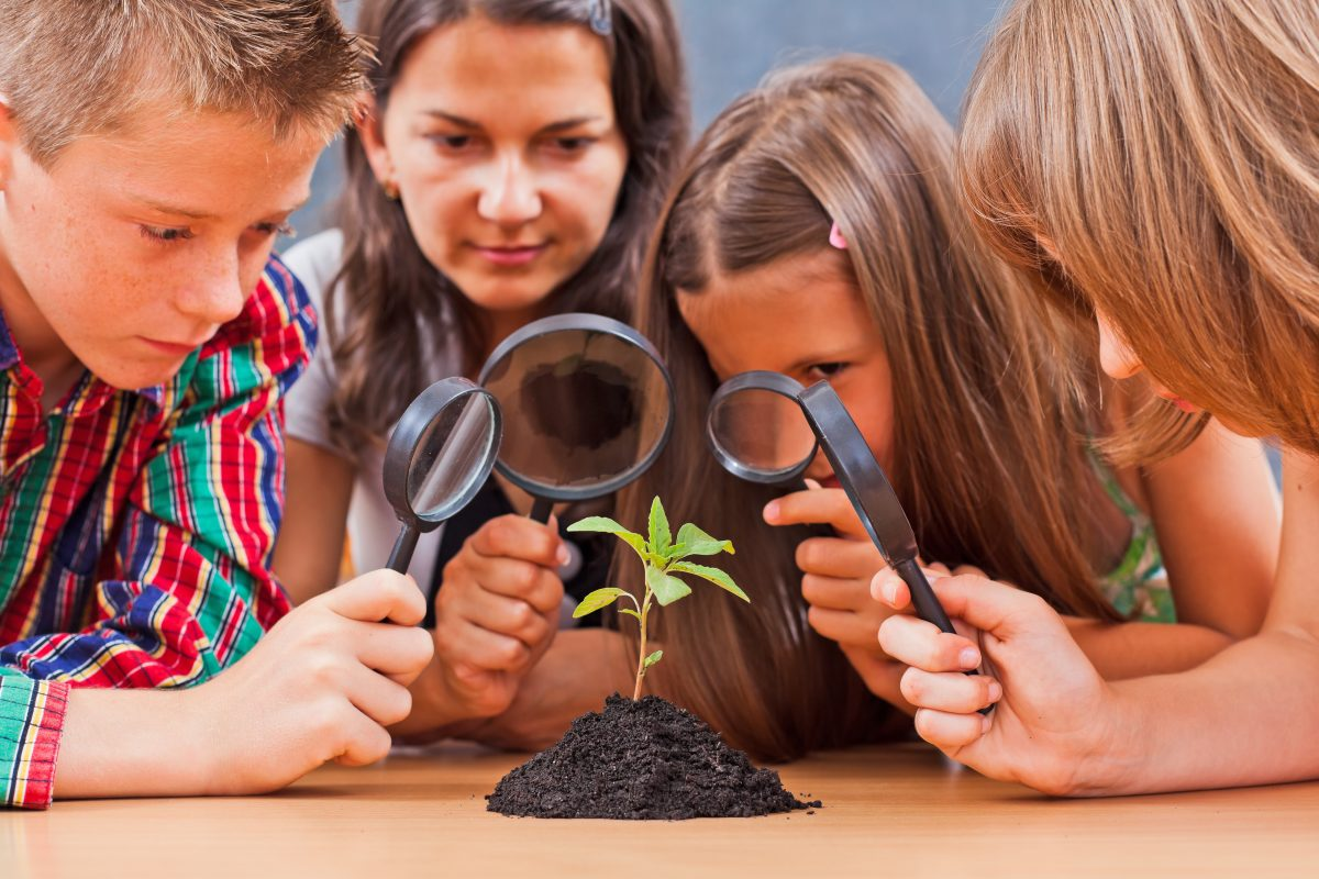 KS2 Biology is a crucial element of SATS Science.